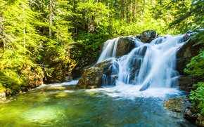 forest, trees, waterfall, river, nature