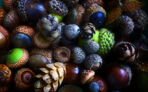 acorns, Cones, forest products