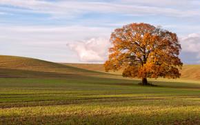 campo, albero, autunno, paesaggio