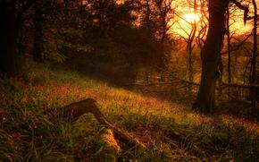 coucher du soleil, forêt, arbres, nature