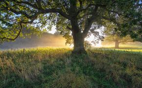 puesta del sol, árboles, paisaje
