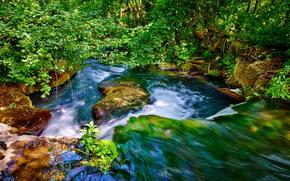 瀑布, 石头, 夏天, 青菜