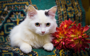 COTE, gato, gato, gatito, fondo, Flores