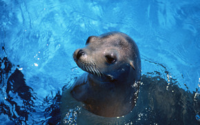 fur seal, animals, Antarctica, bathing