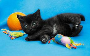COTE, cat, cat, background, kitten, black, Toys