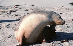 シール, 動物, 南極大陸