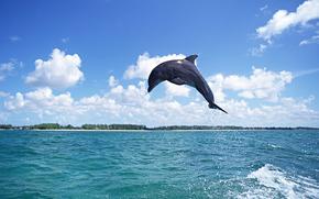 delfino, DELFINI, mare, Mammiferi, saltare