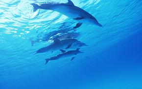 дельфин, дельфины, море, млекопитающие