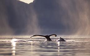 кит, хвост, море, горы