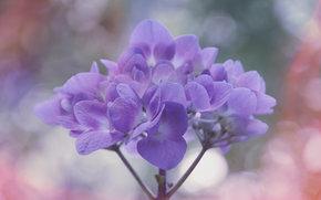 цветы, цветок, макро, флора, растения