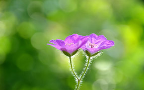 Fiori, fiore, Macro, flora, piante