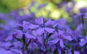 フラワーズ, 花, マクロ, フローラ, 植物