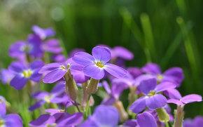 Flowers, flower, Macro, flora, plants