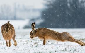 зайцы, зарядка, отжимания, зима, снег