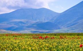 Италия, горы, поле, небо, цветы, мак