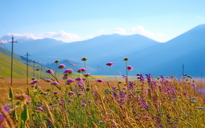 Italy, Mountains, field, sky, Flowers