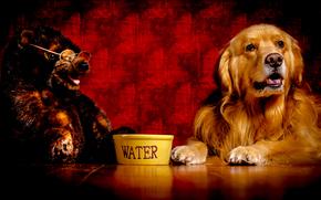 Labrador, hermoso perro, Perro, perro divertido