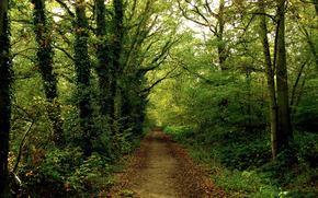 bosque, carretera, sendero