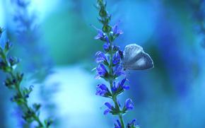 растенте, цветы, бабочка, макро