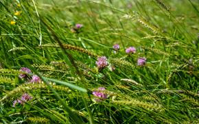 field, grass, plants, Flowers, Macro