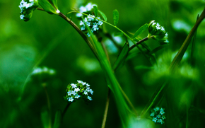 planta, Flores, Macro