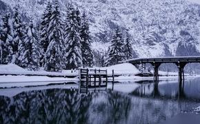зима, река, мост, деревья, ели