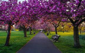 Гринвич Парк, Лондон, деревья, цветение, цветы, дорога, пейзаж