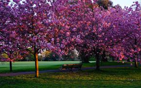 Greenwich Park, Londres, árboles, floración, Flores, carretera, paisaje