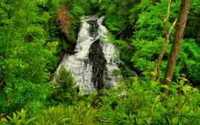 cascata, Rocce, fiume, foresta, alberi, natura
