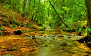 fiume, foresta, alberi, natura