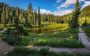 Tipsoo Lago, Mount Rainier National Park, lago, alberi, sentiero, Fiori, paesaggio