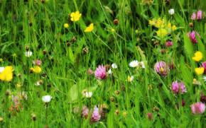 field, grass, Flowers, Macro
