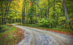 秋, 道路, 森林, 树, 景观