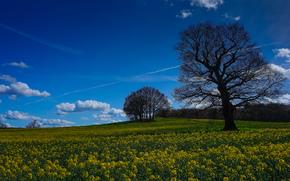 campo, árboles, Flores, paisaje