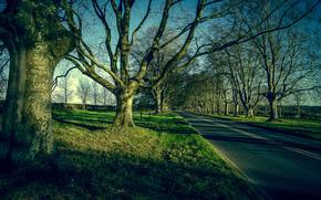 tramonto, stradale, alberi, paesaggio