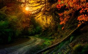 zachód słońca, jesień, las, droga, drzew, krajobraz