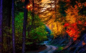 tramonto, autunno, foresta, stradale, alberi, paesaggio