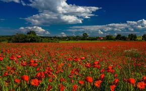Feld, Blumen, Mohnblumen, Landschaft