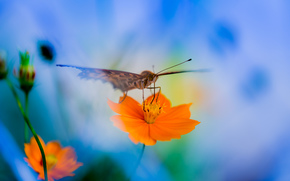 花, 蝶, マクロ