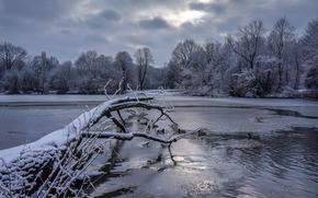winter, lake, trees, Warsaw, park