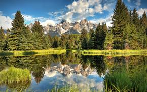 グランドTetons国立公園, ワイオミング州, 山脈, 木, 風景
