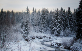 winter, river, forest, trees, landscape