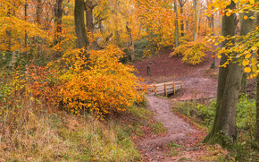 autumn, forest, trees, footpath, bridge, landscape