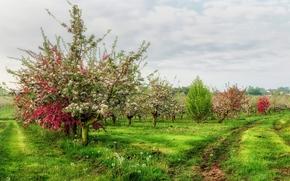 поле, сад, деревья, цветение, пейзаж
