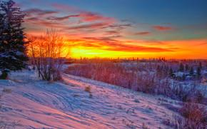 sunset, winter, trees, home, Calgary, landscape