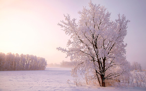 zima, śnieg, drzew, krajobraz