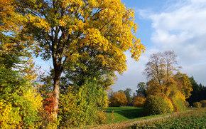 autunno, Colline, alberi, sentiero, paesaggio