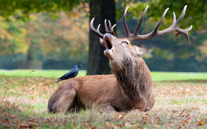 deer, deer, animals, artiodactyls, nature