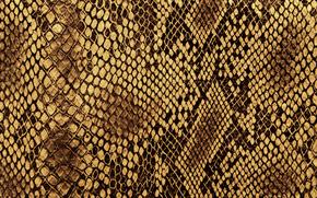 текстура, текстуры, кожа, фон, дизайнерские фоны, змеиная кожа