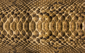 TEXTURE, Tekstura, skóra, tło, Tworzenie tła, Snake skin